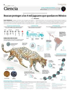 This is Visual Journalism - Visualoop All About Animals, Animals And Pets, Jaguar, Academic Poster, Biology Classroom, Wildlife Paintings, Mundo Animal, Environmental Science, Data Visualization