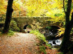 Muckross Park