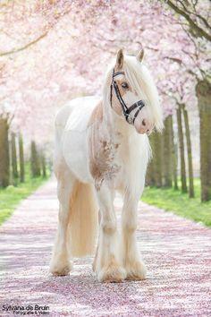 Spring horse