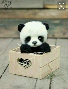OH MY GOSH!!! Is that a real panda?
