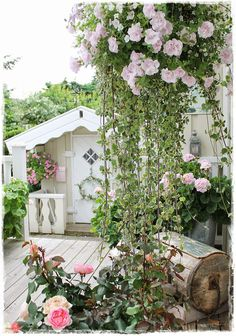 Love this combination for a hanging basket!