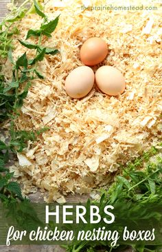 herbs for chicken nesting boxes