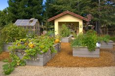 Raised Garden Beds Design Ideas, Pictures, Remodel and Decor