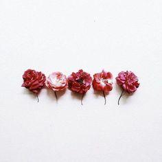 Rows of Rose - Vicki Archer // https://www.instagram.com/vickiarcher/?hl=en