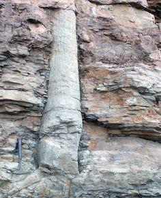 skamenený strom