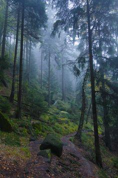 Mithgrean forest