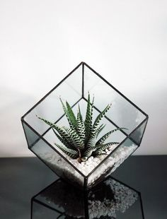 Geometrische Glasterrarium / Cube / Quadrat / handgemachte Glas Pflanzer / moder… Geometric glass terrarium / cube / square / handmade glass planter / modern planter for interior / stained glass terrarium Terrarium Diy, Air Plant Terrarium, Glass Terrarium, Terrarium Wedding, Air Plants, Indoor Plants, Indoor Gardening, Flower Vases, Flower Pots
