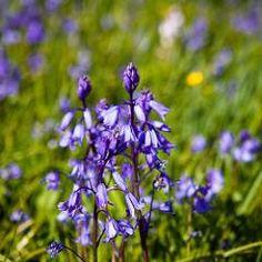 martinsmith99 posted a photo:  Spring flowers - April 2016  http://ift.tt/298jo8E - http://ift.tt/g8FRpY