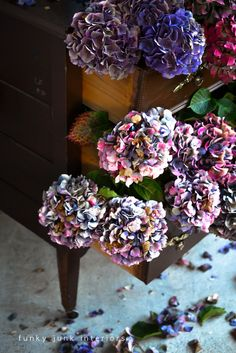 I was about to throw one of my dressers onto the curb, when I noted a neighbour's hydrangea bush gone crazy. She didn't want the blooms, so I changed my mind ab…