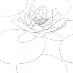 how-to-draw-a-lily-pad-8