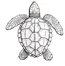 Turtle templates