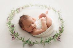 Lavender Nest