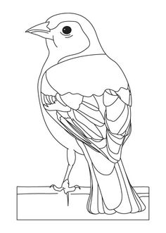 bird watching coloring pages - photo#25