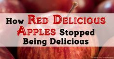 Thanks to large-scale selective breeding, the Red Delicious apples that were once a mainstay of the American pantry became not just unpopular but inedible. http://articles.mercola.com/sites/articles/archive/2016/02/20/red-delicious-apples.aspx