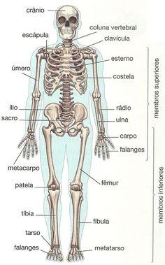 Nomes dos ossos do esqueleto do corpo humano