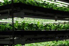 Entrepreneurs Transform Urban Farming with High Tech Solutions