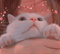 Cute Little Kittens, Cute Baby Cats, Cute Cats And Kittens, Cute Little Animals, Kittens Cutest, Cute Dogs, Funny Cat Wallpaper, Cute Panda Wallpaper, Cute Animal Photos