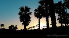 Tonight's beautiful sunset in paradise :)  #beautiful #palmtrees #sunset #photo from #paradise #maspalomas #grancanaria #spain   #foto #puestadesol #bonita desde el #paraiso de la #palmeras #maspalomas #grancanaria #islascanarias #españa