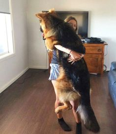 I miss my big beautiful long hair German shepherd so much! She was the best huggin dog ever!!