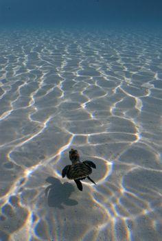 Baby Turtle #turtle #turtles #tortoise