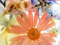 Suncatcher with Pressed Flowers-