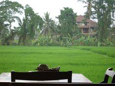 Favorite lunch spot, Bali, Indonesia