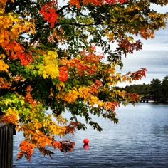 Fall in Muskoka - look at those colours!
