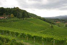 Österreich - Steiermark  Weingut Tement - Lage Zieregg