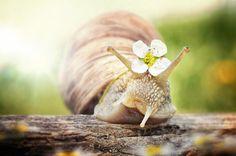Милые улитки в фотографиях Габи Штиклера