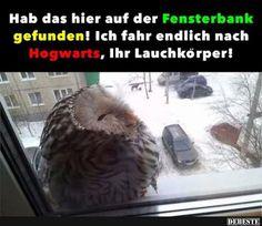Hab das hier auf der Fensterbank gefunden! | Lustige Bilder, Sprüche, Witze, echt lustig