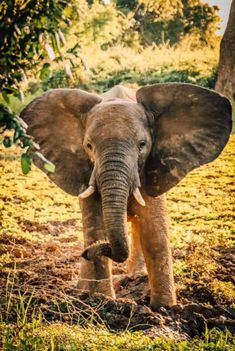 AFRICAN SAFARI ANIMALS African Animals