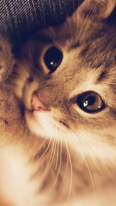 Find images and videos about cute, cat and animal on We Heart It - the app to get lost in what you love. Cute Baby Cats, Cute Cats And Kittens, Cute Funny Animals, Cute Baby Animals, Kittens Cutest, Super Cute Kittens, Kittens Meowing, Animal Babies, Pretty Cats