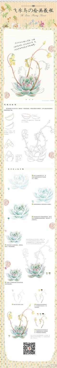 Watercolor or colored pencil succulent plant Watercolor Journal, Watercolor Pencils, Watercolor Paintings, Painting & Drawing, Pencil Painting, Botanical Drawings, Botanical Art, Botanical Illustration, Pencil Art