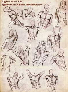 Male body study by liger-inuzuka on deviantart cg croquis d' Human Figure Drawing, Figure Drawing Reference, Body Drawing, Anatomy Reference, Art Reference Poses, Life Drawing, Drawing Muscles, Drawing Men Face, How To Draw Muscles