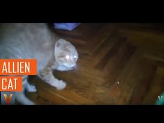 Viral videos,Allien cat.Thanks for watching ! Your favorites , of the best viral…