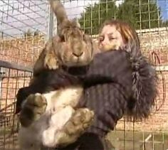 World's largest bunny.