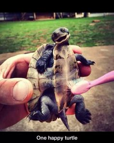 What a happy turtle