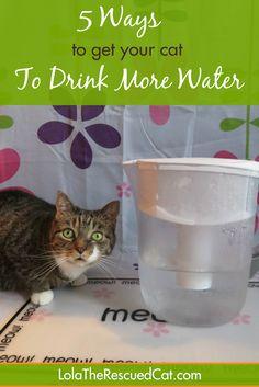 Health Pictures, Pet Pictures, Kitten Care, Pet Care Tips, Pet Tips, Cat Behavior, Cat Health, Happy Animals, Gatos