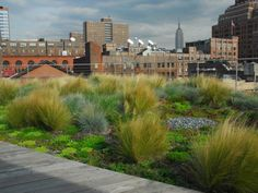 Skygarden - Extensive & Intensive Green Roof Media - Products for a Better Environment by Stancills Inc. - Make the World a Better Place