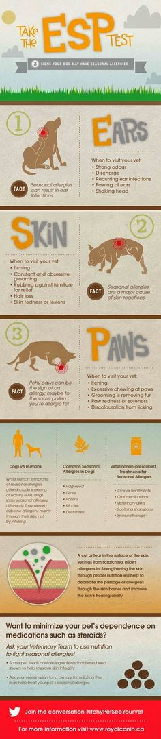 Get to know the signs of Seasonal Allergies in #Dogs with this helpful infographic. #ItchyPetSeeYourVet | Homeschooling Mom 4 Two