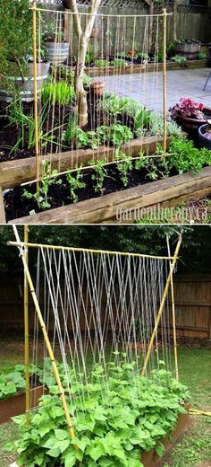 Build a Simple Garden Trellis; All You Need are a few Bamboo Sticks or Tree Branches, and Some Twine #trellisdiy #trellisidea