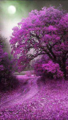 Beautiful tree in purple Beautiful World, Beautiful Places, Stunningly Beautiful, Beautiful Smile, Amazing Places, Wonderful Places, All Things Purple, Purple Stuff, 5 Things
