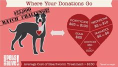 $25K MATCH CHALLENGE! Have a heart and help us raise the funds to treat and care for the Heartworm+ dogs we save from euthanasia. With the help of their dedicated fosters, we give these loving dogs a second chance at a life of love and happiness. From now through Valentine's Day, your gifts will be doubled up to $25,000! Please help us show these deserving dogs that they are loved and valued by giving today! http://www.razoo.com/story/Have-A-Heart-Match-Challenge