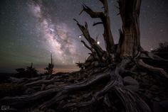 Galaxy and planets seen through the Bristlecone pines forest