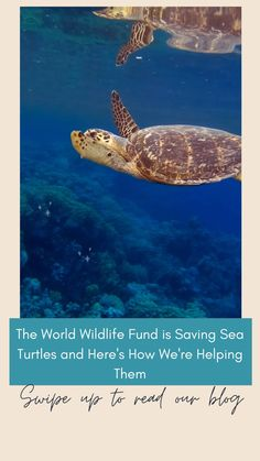Belize Barrier Reef, Great Barrier Reef, Save The Sea Turtles, Turtle Conservation, Secret Keeper, San Diego Beach, Ocean Creatures, Ocean Photography, Save The Planet