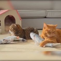 funny pictures of animals videos ~ funny pictures . funny pictures to take with friends . funny pictures of animals videos . funny pictures of chickens . Funny Animal Videos, Cute Funny Animals, Funny Animal Pictures, Cute Baby Animals, Animals And Pets, Cute Cats, Funny Cats, Adorable Kittens, Videos Funny
