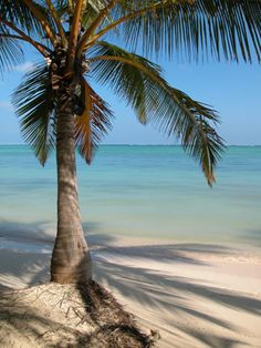 10 Best Beaches: Punta Cana, Dominican Republic Why White sand beaches and affordable resorts are Punta Cana's main draw. Honeymoon To-do Looking for more ways to relax on your beach… Best Honeymoon Spots, Honeymoon Destinations, Vacation Spots, Dream Vacations, Palm Tree Images, Dominican Republic Wedding, Honeymoon Planning, Florida Beaches, Sandy Beaches