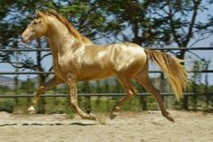 """""""What a very beautiful horse"""""""