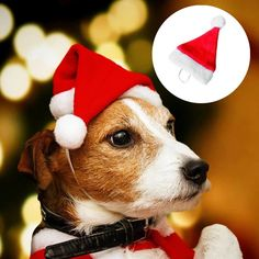 Gogoodgo Dog Santa Hat Cute Birthday Party Cone Hat and Bow tie Collar Set for Dog Cat Small Pets Hat for Christmas Party ** Check out the image by visiting the link. (This is an affiliate link) Diy Halloween Costumes For Women, Christmas Costumes, Halloween Diy, Halloween Makeup, Toy Puppies, Small Puppies, Pet Dogs, Dog Cat, Happy New Year Gift