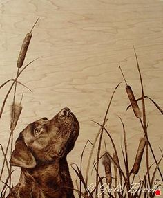 """Sentinel of the Marsh (labrador retriever) by julie bender Pyrography ~ 24"""" x 20"""""""